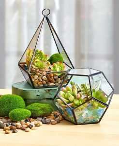 Spice up the decor at your party with these unique terrariums you can use as centerpieces.